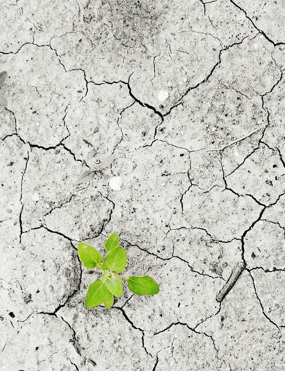 https://riftalliance.com/wp-content/uploads/2021/07/climate-change-3.jpg